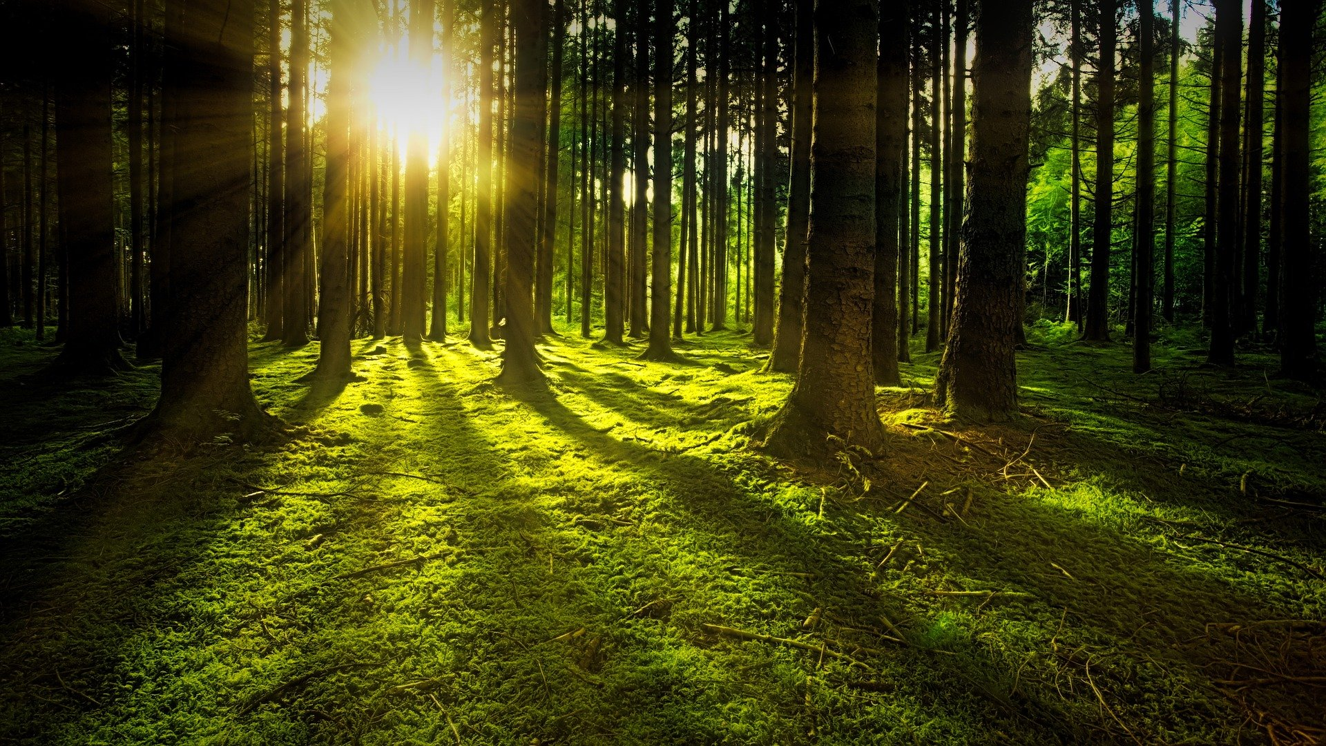 Foto amanecer bosque